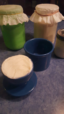 This is my first homemade butter in a butter bell. A butter bell is an old-time homestead butter holder that keeps the butter cool when on the counter. The butter filled cup is turned upside down and stored in the mini-crock. When in use, the butter bell is set on top of the chilled mini-crock to retain a cold temperature. Ice can be added to the crock for summer days or prolonged use. Unlike store butter, raw goat butter has live cultures and can ferment at warm temperatures, turning the flavor sour.  Sour cream and kefir cultures are starting in the rear. Keifer cheese can be cultured and strained in cheesecloth to mimic a very healthy but tart cream cheese.