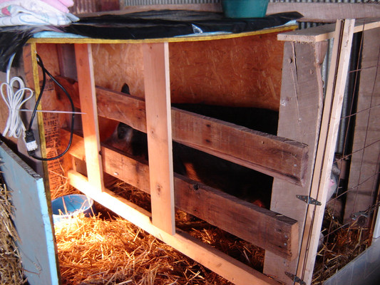 Dee-Dee didn't like the farrowing crate, and I hated the idea. It didn't seem right.  I demolished it and used it for firewood.