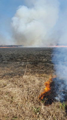 Taking care of prairie grass isn't easy. The land has to be burned every few years to release nitrogen back into the soil. The fire also helps germinate some wild grass seeds that will stay dormant for up to 15 years.