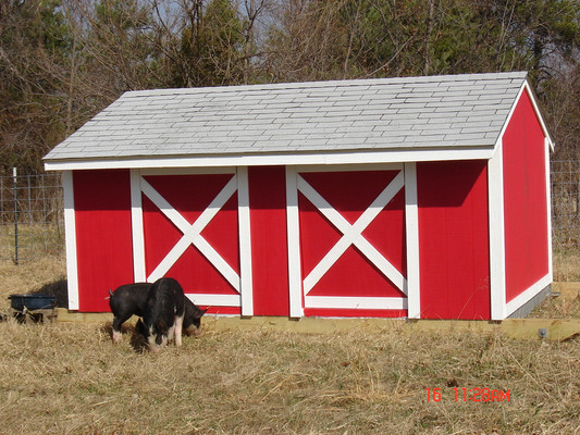 The finished pig hut out in the pasture.