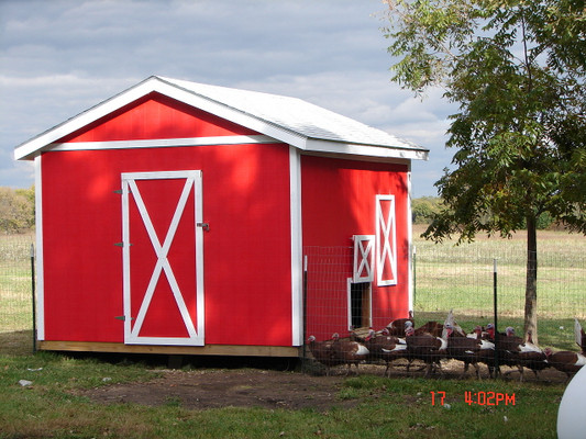 The turkey coop was completed. This photo was taken on a cool summer evening before it was time for the turkeys to coop up for the night.