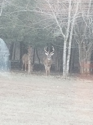 This photo was taken from the back door of the livingroom. Deer often visited the back yard.