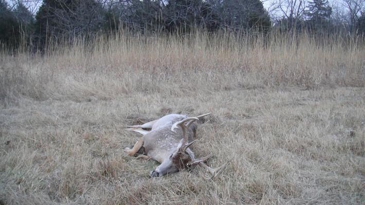 My first deer harvest.