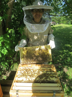 OUR BEES AT WORK!