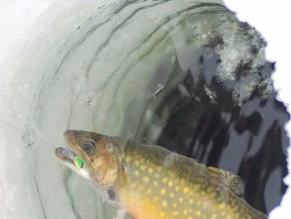 How to Catch Trout Ice Fishing