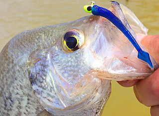 How to Catch Summer Crappie Using Electronics