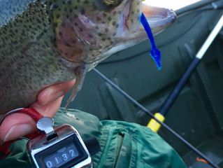 Catching One Hundred Trout in a Day
