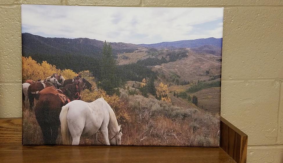 horse canvas casper wy