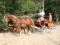 Attelage à cheval ou randonnées...
