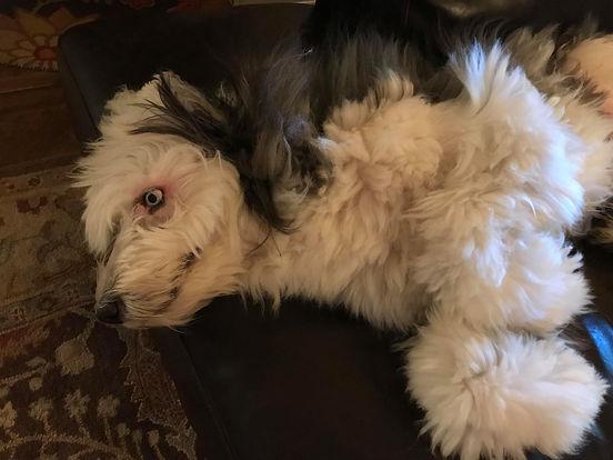 Dog 2.jpg