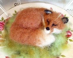sleeping foxy.JPG