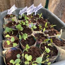 Isabelle's paper plant pots!