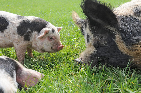 kune baby and momma stock.jpg