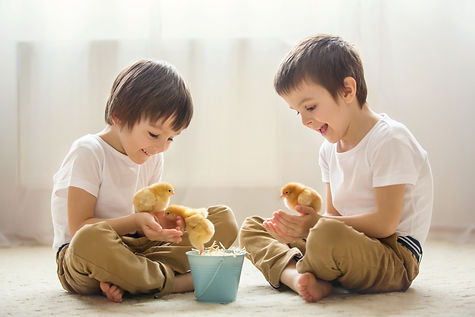 Two sweet little children, preschool boys, brothers, playing with little chicks at home, baby chicks