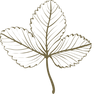Icon on Transparent Background.png
