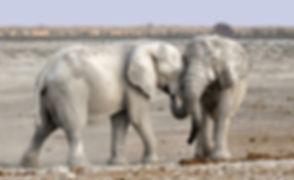 elephant-1170108_1920_edited_edited.jpg