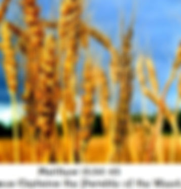 Parable of the Wheat.jpg