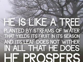 """Ever Prosperous"""