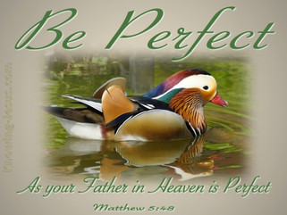 """""""Built Up in Christ's Perfect Love"""": PERFECT LOVE"""