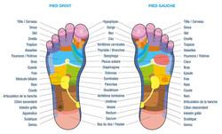 carte_reflexologie_pieds
