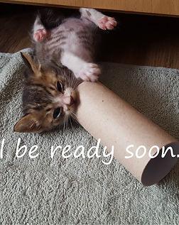 Will be ready soon....jpg