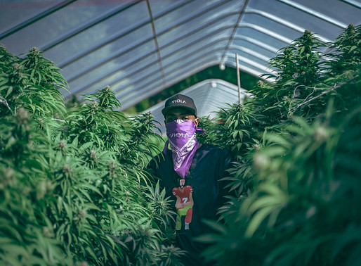 I'm a Cannabis Influencer...But What Does That Mean?