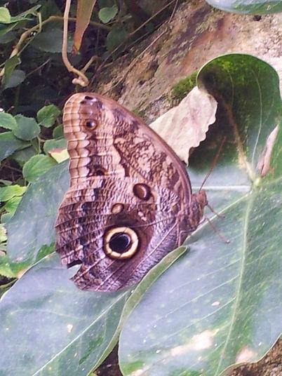 Karine Hanselmann, psychologue intégrative, 75014 – Le papillon fait sa métamorphose…