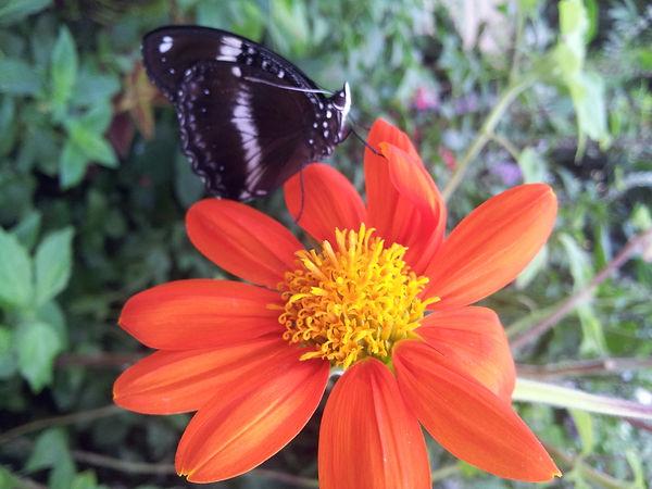 Karine Hanselmann, psychologue intégrative, 75014 – Retrouver une vie fleurie et colorée