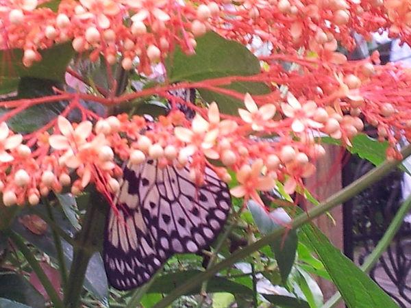 Karine Hanselmann, psychologue intégrative, 75014 – Le papillon prend son envol…