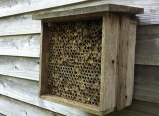 Help the Bees of Yamagata! やまがたの蜂について学びながら「蜂の家」をつくろう