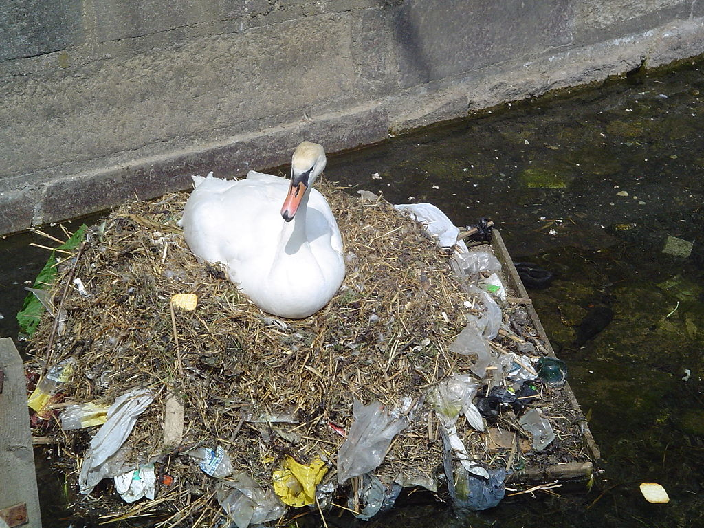 Pollution_swan.jpg