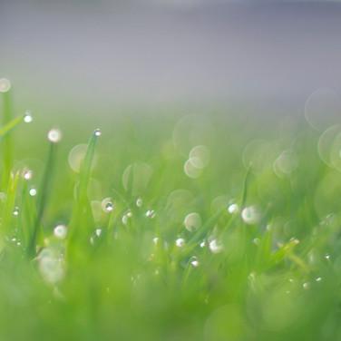 Bubbles (c) Brenda Lupton