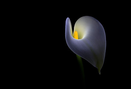 04_Lily_Light_Painting_76.jpg