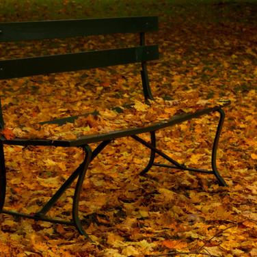 Bench (c) Allan Bigham