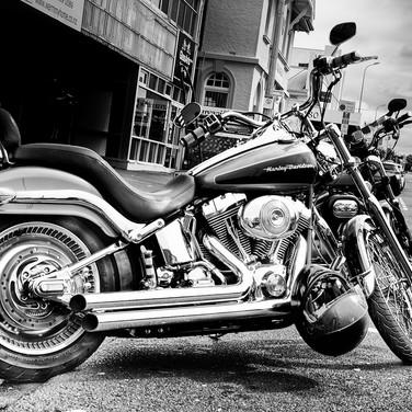 Harley (c) Aston Moss