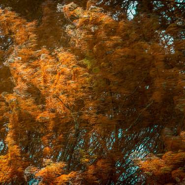 Autumn Colours (c) Chris Moselen
