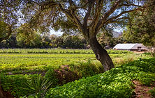 New 8.5-Acre Ranch in Carpinteria