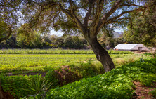 New 8.5-Acre Ranch in Carpinteria