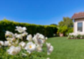 3803 White Rose_0012.jpg