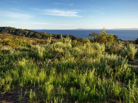 Lush Landscape