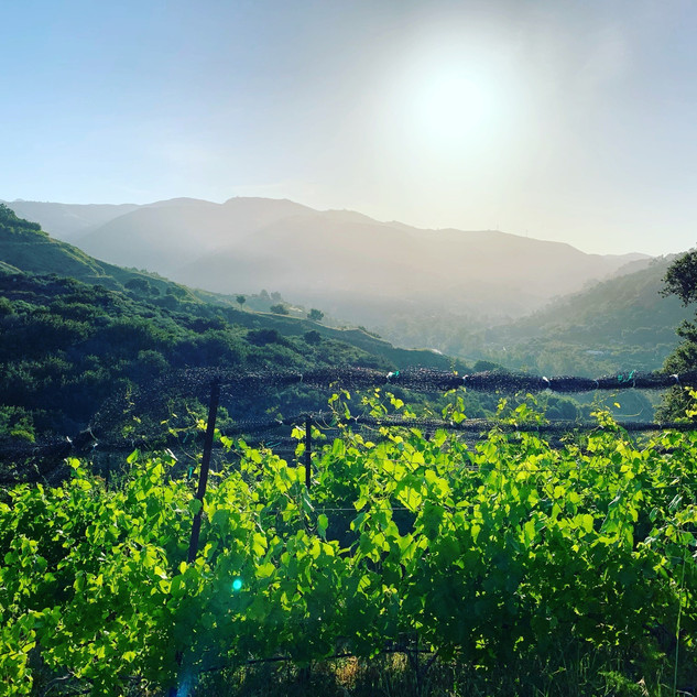 Vineyard Views.jpg