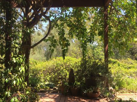 A Short Drive to Serenity - Shepard Mesa, Carpinteria