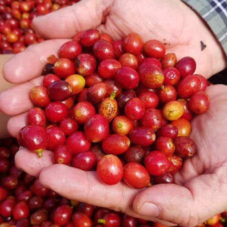 What is Speciality Coffee?
