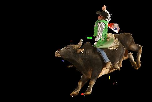 bull2.png