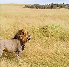 southAfrica_snip.jpg