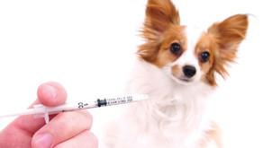Vacunación en perros y gatos, ¿cuando es realmente necesario? (Parte 2)