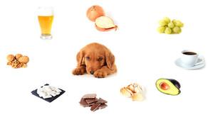 Cuales son los alimentos prohibidos para nuestras mascotas?