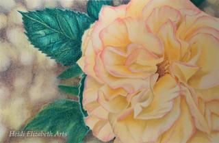 Nanna's Rose