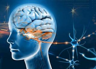 'Música do Discurso' ligada à área do cérebro exclusiva dos humanos