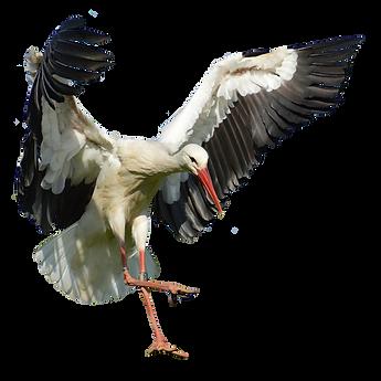 stork-2754898.png